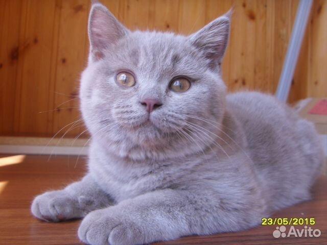 Ответы Mail Ru: Нормально ли то, что моя кошка