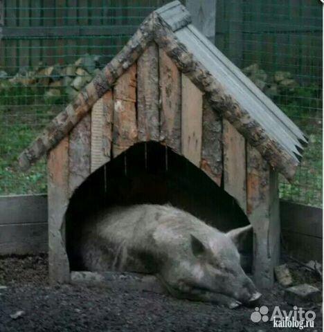 вакансия свиноводства:
