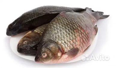 Доска ру Рыбное хозяйство - Рыба живая, мальки, Цены