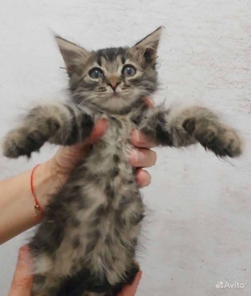 Отдам милых очаровательных котят девочек мальчиков