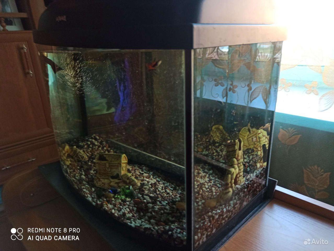 Аквариум, рыбки гуппи купить на Зозу.ру - фотография № 1