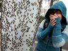 Тараканов уничтожение поморитькомаров гарантиейгод