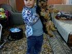 Вязка породистой собаки