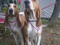 Авито частные объявления собаки гончие краснодарский край разместить объявление о продаже земельного участка г.алматы