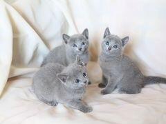 Частные объявления по продаже котят в санкт - петербурге дать объявление а газете вдв