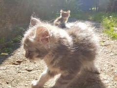 Котята девочки ждут своих хозяев