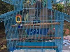 Попугайчеки