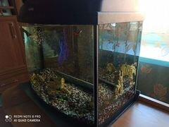Аквариум, рыбки гуппи