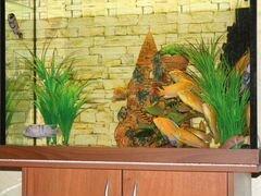 Продаю аквариум и рыбок