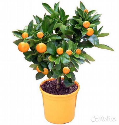 Картинки по запросу фруктовое дерево