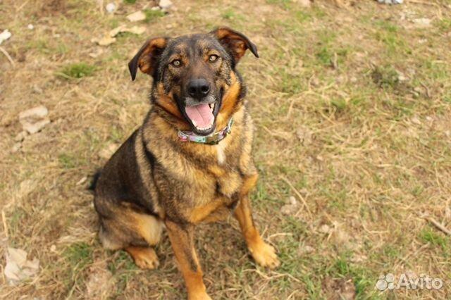 Собака в дар некрупная купить на Зозу.ру - фотография № 6