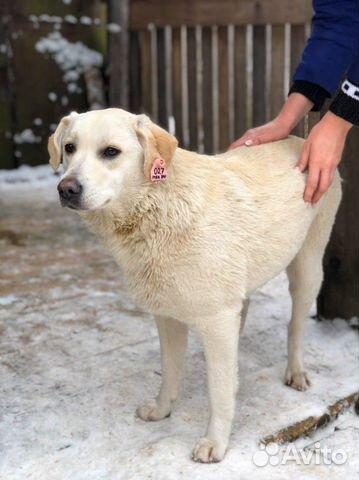 Снежка ждёт своего хозяина купить на Зозу.ру - фотография № 1