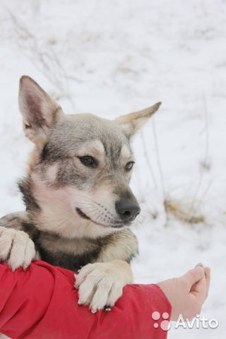 Пёс компаньон в добрые руки купить на Зозу.ру - фотография № 5