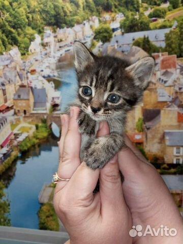 Кошка 89170821738 купить 6
