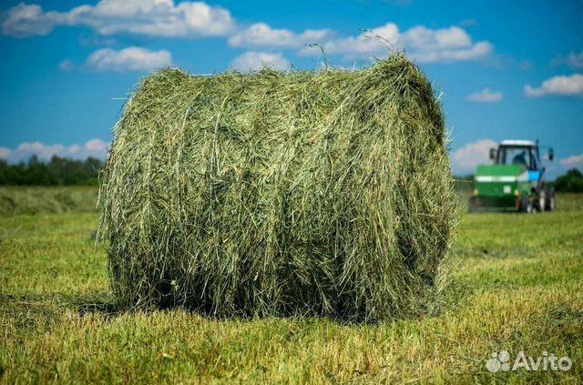 Продажа сено 2020г луговое разнотр. из волгограда  купить 1