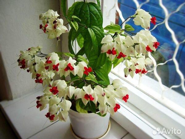 Самые красивые цветы для Вашего дома  купить 2