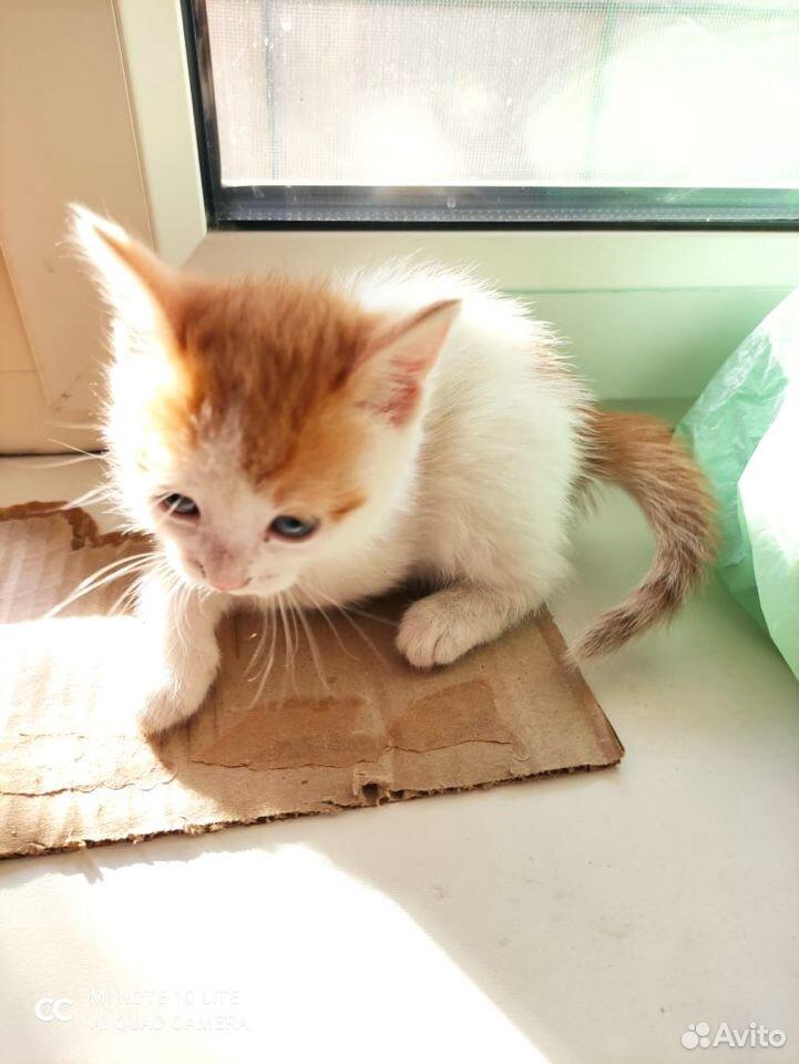 Котята в добрые руки  89011218595 купить 3