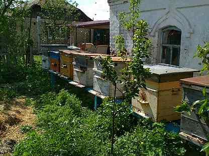 картинки пчелы на липецк ремонту часов
