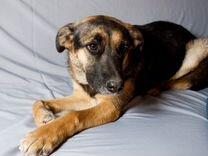 Жулька — Собаки в Геленджике