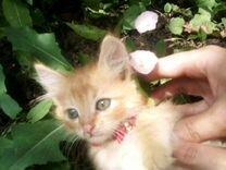 Отдам котенка в добрые и заботливые руки