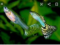 Аквариумные рыбки — Аквариум в Геленджике