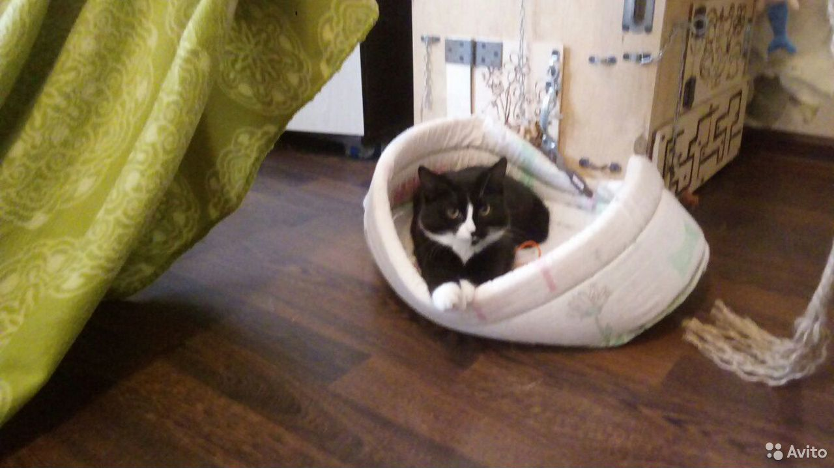 Кошка  89220421042 купить 3