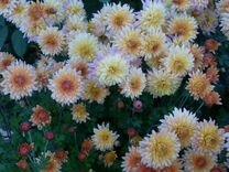 Цветы для дома и сада