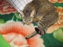 Кошечка Айрис в добрые ручки