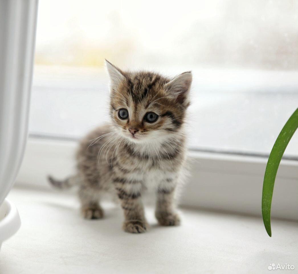 Отдам котят  89129770244 купить 5
