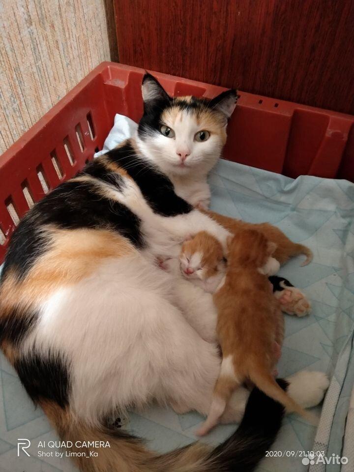 Отдам миленьких котят  89039946144 купить 9