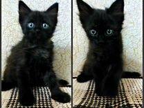 Котики и кошечка ищут любящую семью
