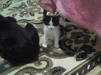 Маленькие котята ищут друга-человека