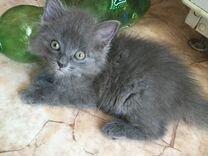 Маленький котёнок