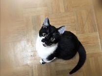 Кот — Кошки в Геленджике