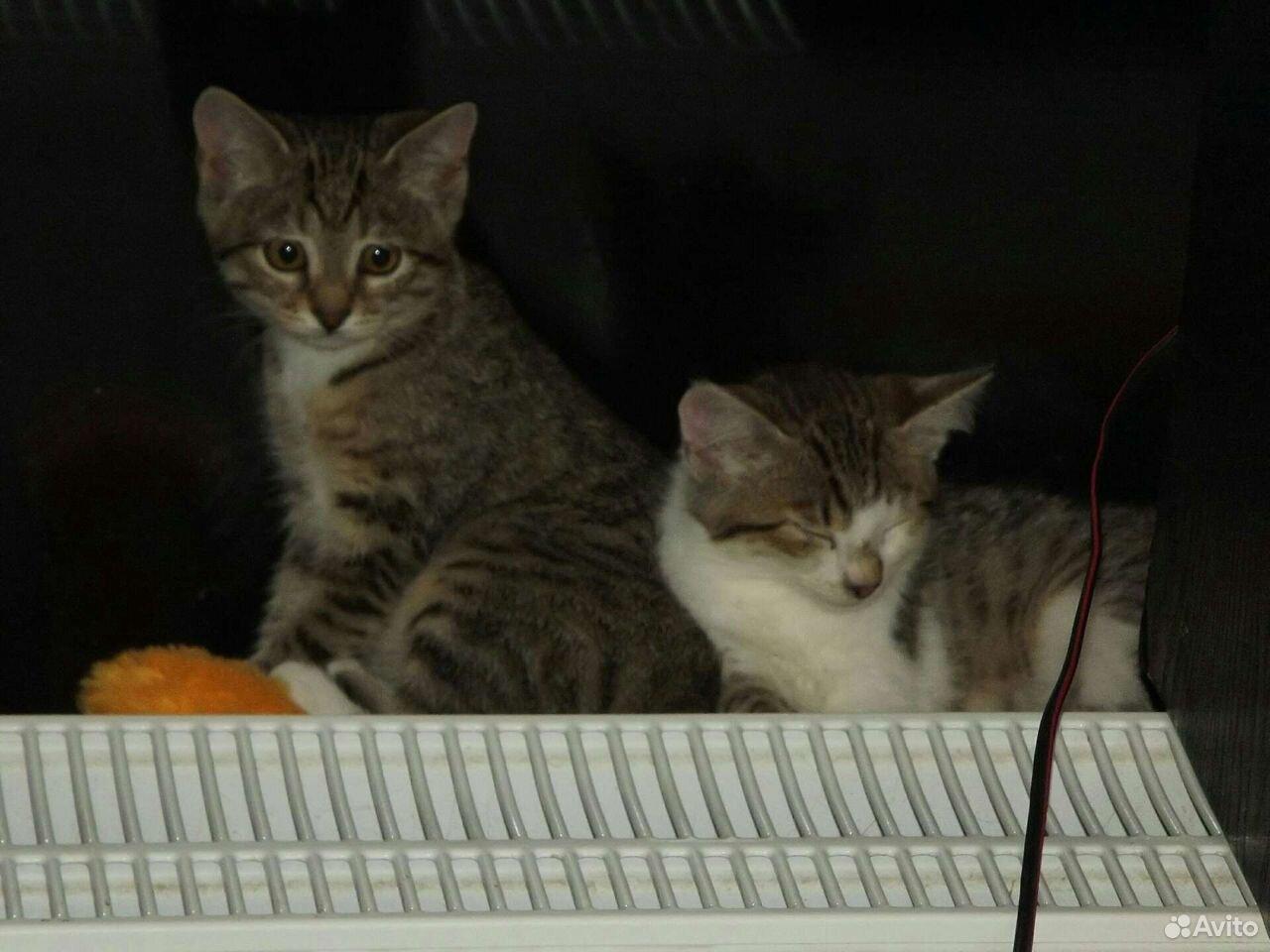 Котята, 3 девочки